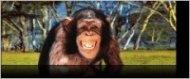 Разделител за книга Chimpanzee Bookmark [0528]